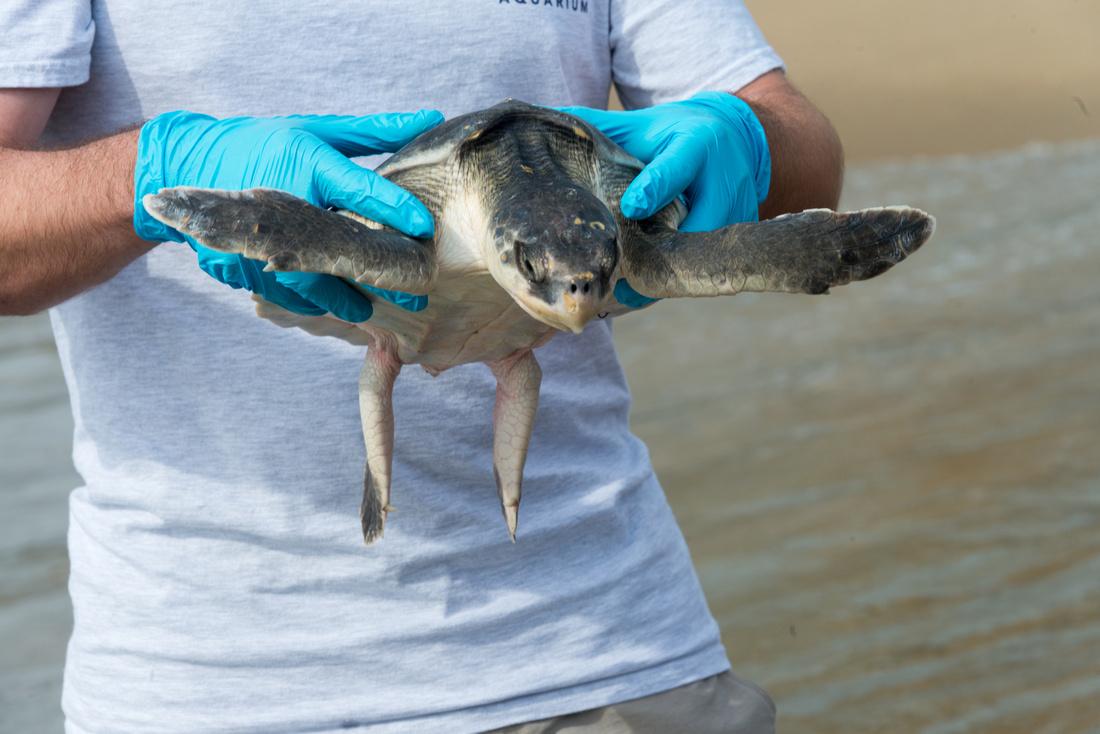 Turtle-110